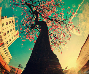 tree, photography, and pink image