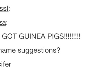 Devil, suggestions, and guinea pig image