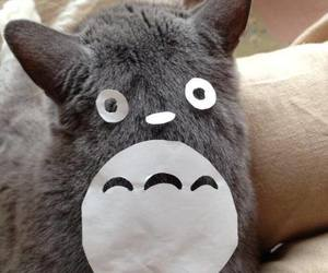 totoro and cat image
