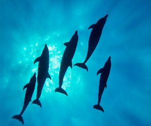 dolphin, amazing, and blue image