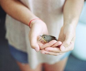 bird, hands, and photography image