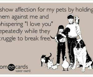 pet, funny, and lol image