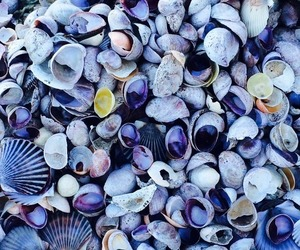 shell, sea, and beach image