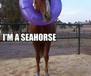 funny, horse, and seahorse image