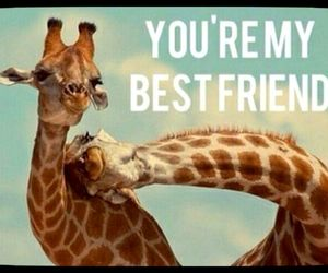 giraffe, best friend, and lovely image
