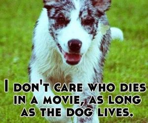 dog, movie, and movies image