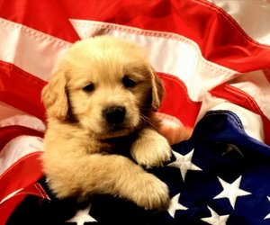 dog, puppy, and flag image