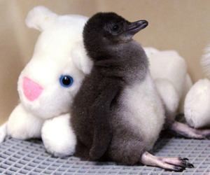 animal, penguin, and adorable image