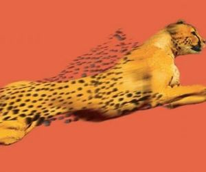 animal, art, and cheetah image