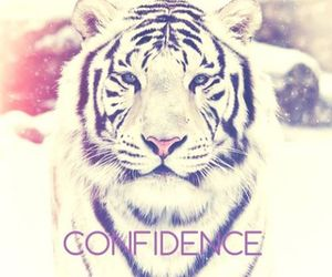 confidence, tiger, and white image