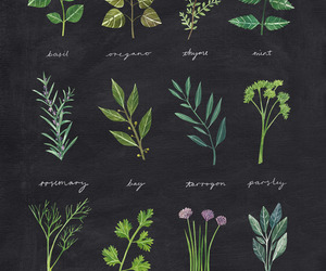 art and herbs image