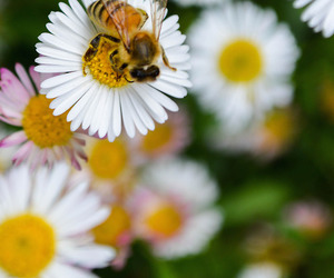 bee, flowers, and spring image