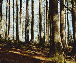 beauty, photo, and tree image