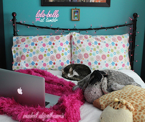 photography, room, and pink image
