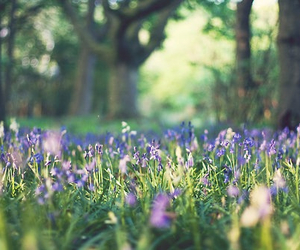flowers, arsty, and grass image