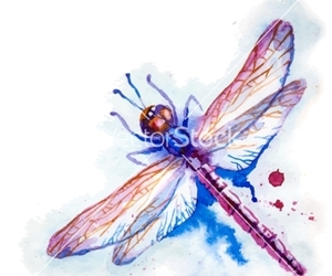 bug, dragonfly, and insect image