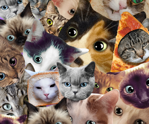 background, cat, and yolo image