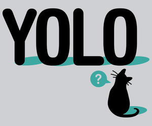 cat and yolo image