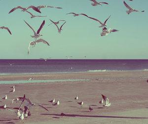bird, girl, and beach image