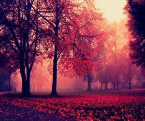 tree, autumn, and red image