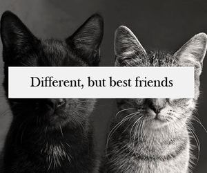 black n white, ♥, and cats image