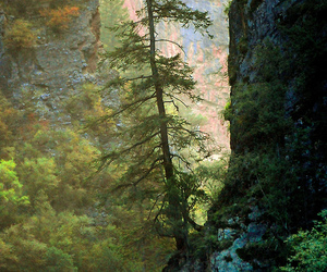 colors, forest, and nature image