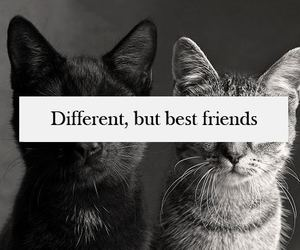 black and white, friends, and cats image
