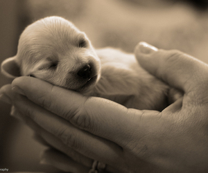 cute, puppy, and dog image
