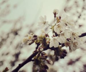 blossom, nature, and photography image