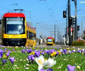city, flowers, and tram image