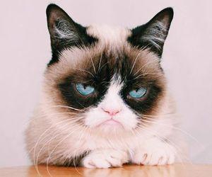 cat and grumpy cat image