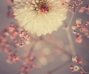 flowers, nature, and ladybug image