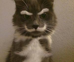 chat, funny, and moustachos image