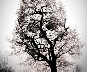 tree, skull, and black and white image
