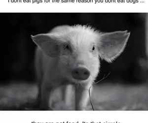 animals, piglet, and piggy image