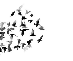 bird, fly, and art image