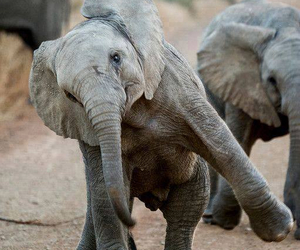 animal, elephant, and cute image