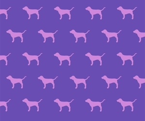 wallpaper, pink, and dog image