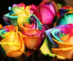 colorful, colourful, and flowers image