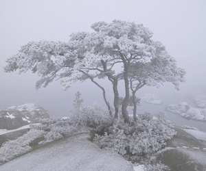 nature, pale, and tree image