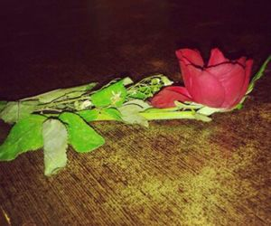 gift, rose, and flower red image