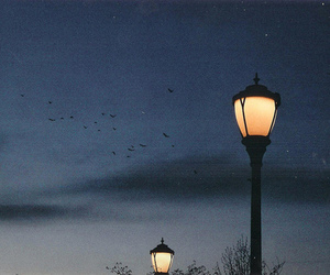 night, light, and bird image