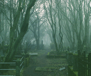 cemetery, forest, and nature image