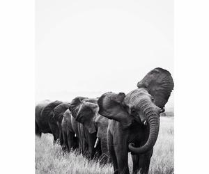 elephant, animal, and black image
