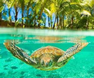 turtle, sea, and animal image