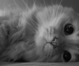 cat and so cute image
