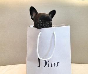 animal, dior, and dog image