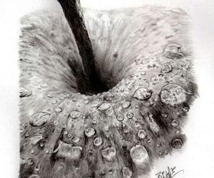 apple, art, and black & white image