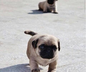 animals, puppies, and walking image