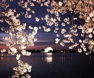 amazing, beautiful, and spring image
